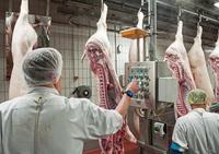 Das Elend der Fleischarbeiter im reichen Deutschland